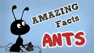 Amazing Facts About Ants | Cool Ant Facts | OMG Facts About Animals