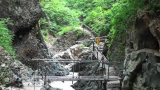 世界自然遺産 白神山地の散策