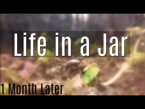Large Eternal Terrarium (Month 1) - Life in a Jar