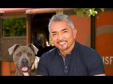 Cesar millan puppy video