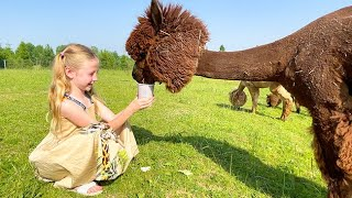 Nastya studies who alpacas are and takes care of animals