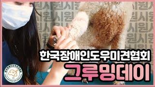 한국장애인도우미견협회 #브이로그 그루밍 편