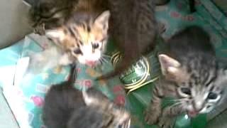 Котята орут.Голодные.