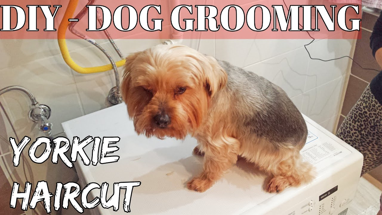 "DIY - How to Groom A Yorkshire Terrier ""Yorkie"" puppy Dog"