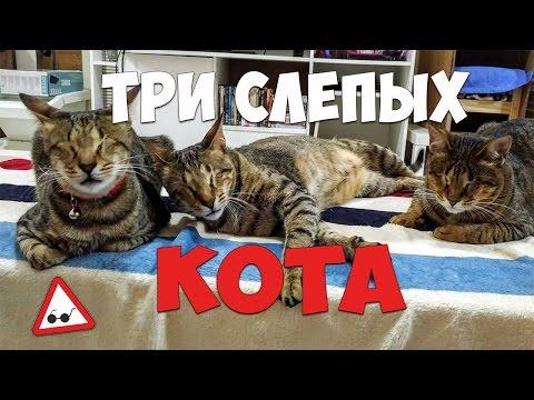 Проститутки Москвы Каталог московских индивидуалок и