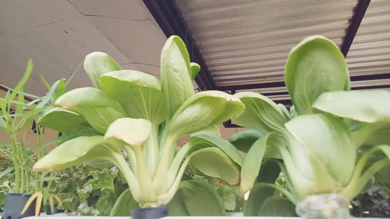Bukan pagar makan tanaman   YouTube
