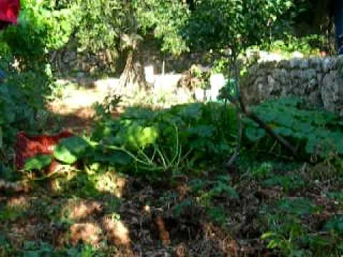ΒΓΑΛΣΙΜΟ ΠΑΤΑΤΑΣ ΘΑΝΑΣΗΣ 2010 001.MOV