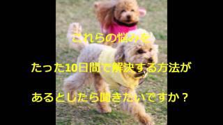 詳細はコチラ⇒http://t-takehisa.net/pet2/ 犬 病気 ペット 犬 犬 しつ...
