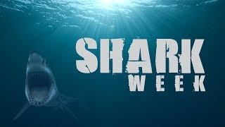 Shark Week 2017 Great White Serial Killer Lives | Discovery