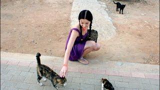Змеи. Кошки. Собаки на Кипре.