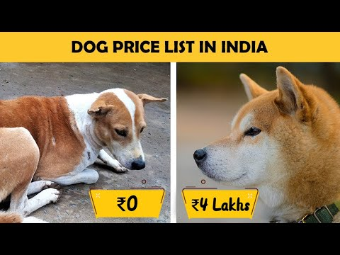 Dog Prices In India  Part 1 (Large Breed Dogs)