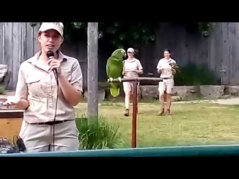 African Lion Safari Bird Show