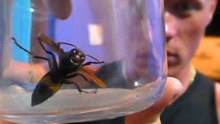 Гоа Индия. Приколы с насекомыми и обзор дома в Сиолиме.(Дом в Сиолиме и его жители. Схватка с огромным опасным насекомым. Отдых в Гоа в сезон дождей. Морджим Сиолим..., 2015-04-25T12:34:44.000Z)