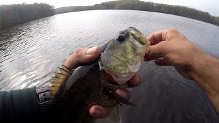 Fun Fishing for FENCE RIDER Largemouth Bass - Crappie & Perch
