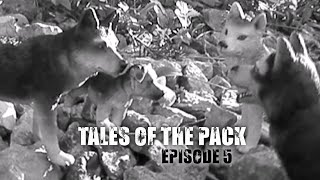 Tales of the Pack - E5 (Schleich Wolf/Dog Movie)