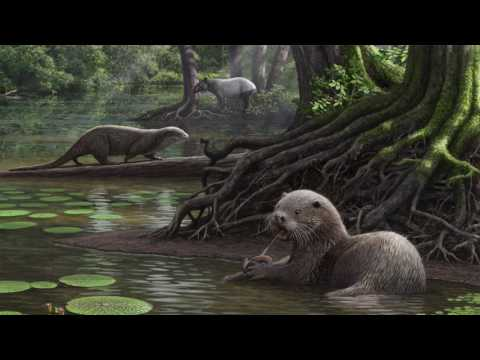 Siamogale melilutra: New Ancient Otter Species Among Largest Ever Found