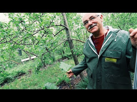 The Permaculture Orchard - For Anyone