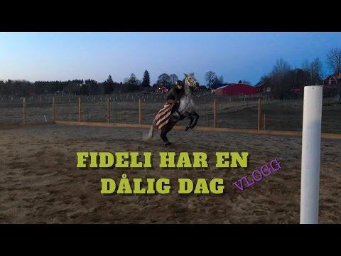 FIDELI HAR EN DÅLIG DAG || Vlogg