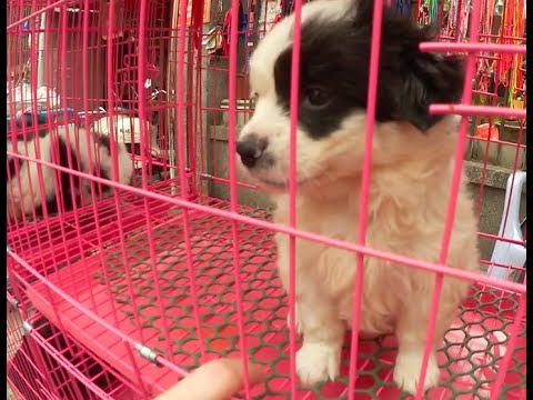 Puppies in Shantou!