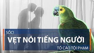 Sốc! Vẹt nói tiếng người tố cáo tội phạm | VTC1