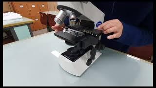 광학현미경의 구조와 기능
