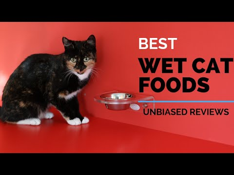 10-best-wet-cat-foods-2019- -best-selling---ranking-&-review