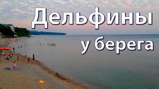 Отдых на Чёрном море, рыбалка и дельфины