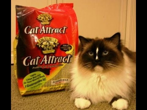 Cat Attract Cat Litter By Dr Elsey S Precious Cat Litters