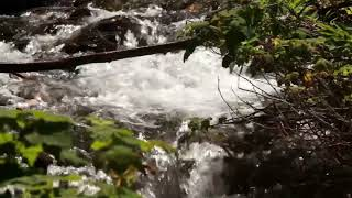 3 Hours Natural Forest Sounds Birds Singing-Sound of Relaxing Nature-Soothing Water Flowing thumbnail