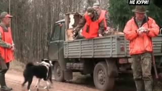 Загонная охота на кабана . 2018