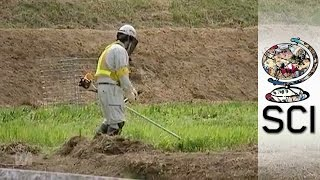 Fukushima's Radioactive Contamination Three Years On