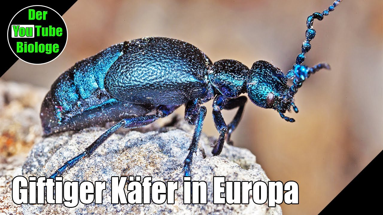 Tiere Europa
