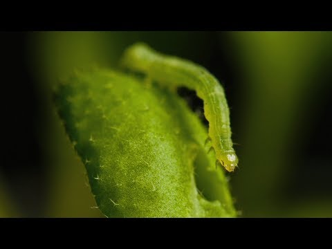 Plants use circadian rhythms to prepare for battle with insects