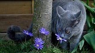Смотреть лучшие приколы+про кошек.Кошачий-упс!