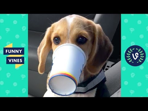 TRY NOT to LAUGH or GRIN: Funny Animals Vines Fail Compilation 2017