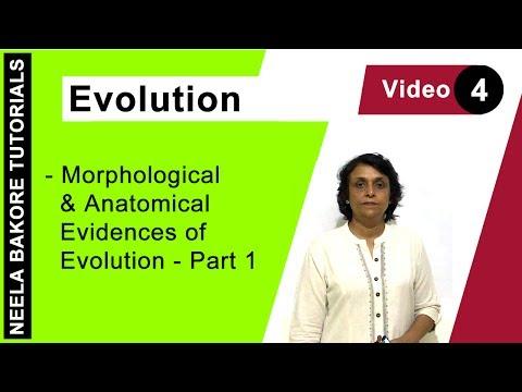 Evolution - Morphological & Anatomical Evidences of Evolution - Part 1