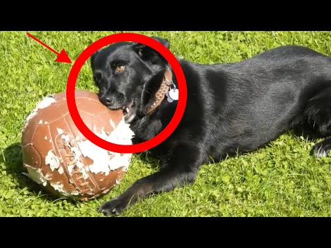 why-does-my-dog-chew-everything?-top-6-reasons-revealed