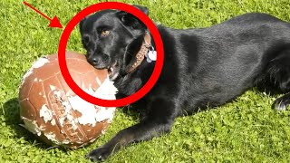 Why Does My Dog Chew Everything? Top 6 Reasons Revealed