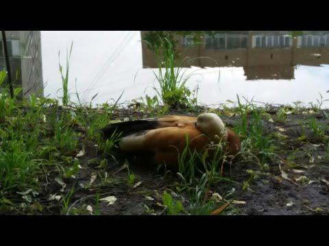 Ботанический сад Москвы и аптекарский огород. Часть 1.