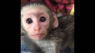 Cute animals #9