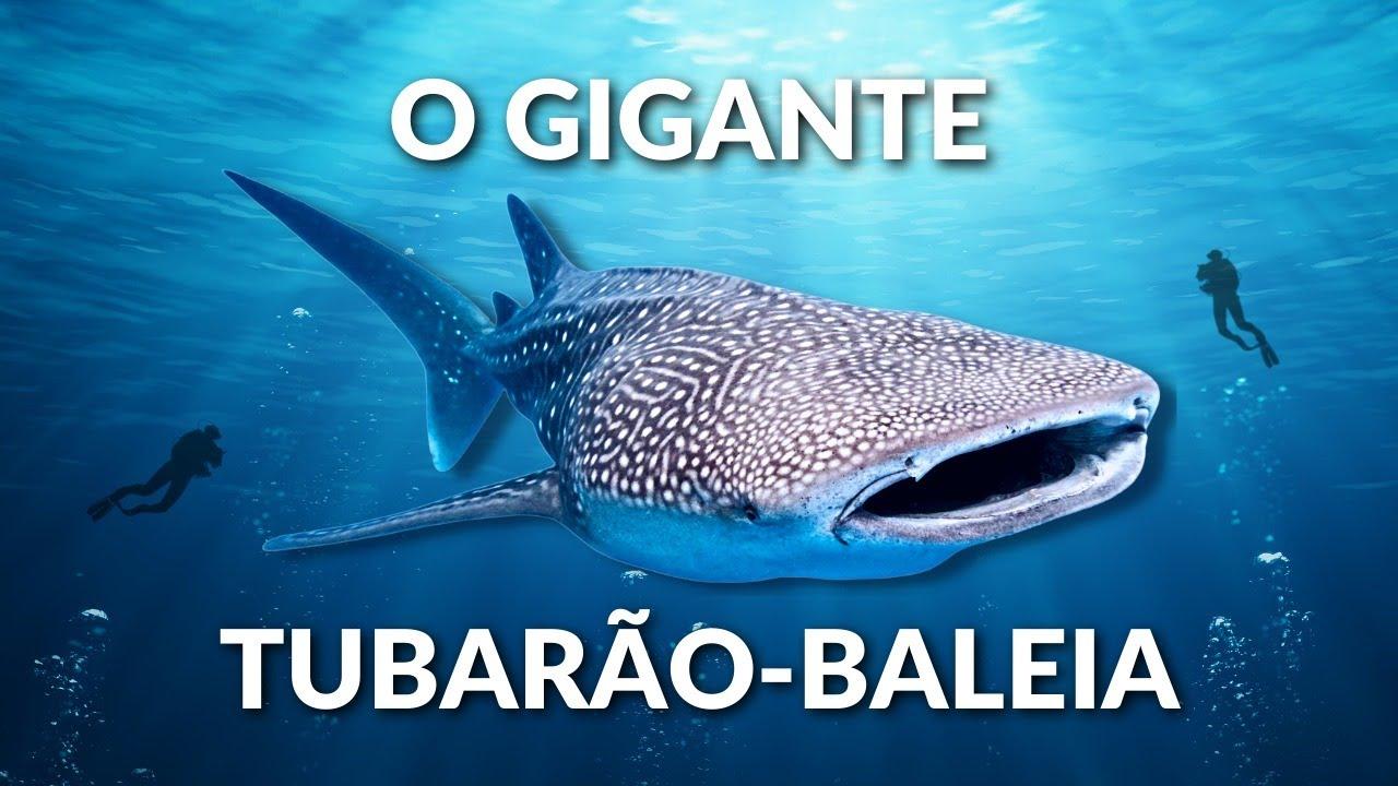 TUBARÃO BALEIA! O MAIOR PEIXE DO MUNDO! UM GIGANTE DOS OCEANOS! CONHEÇA ESSE ANIMAL INCRÍVEL!!!