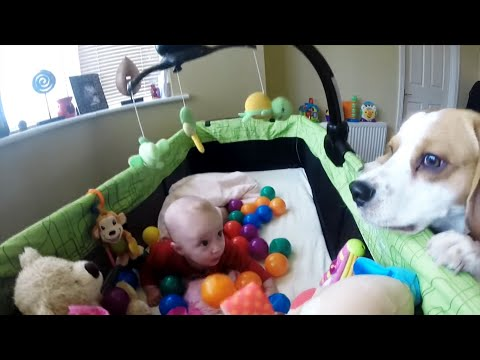 Dogs are family:Cute and funny dog turns this little baby's crib into a ballpit