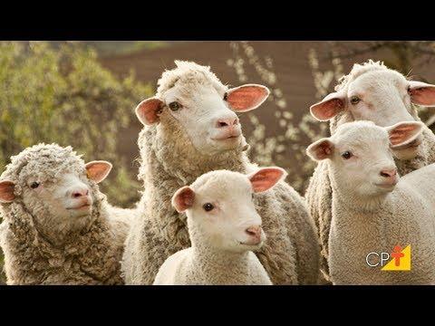 Clique e veja o vídeo Curso a Distância Técnicas para Produzir Mais Cordeiros