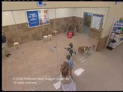 Petsmart free doggie day camp coupon