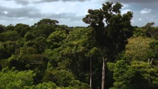 Amazônia S/A (Sociedade Anônima) - Episódio 1