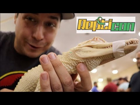Repticon', a two-day reptile show, coming to Jacksonville
