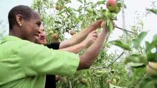 WaGrown S1E11: Zirkle Fruit Company - Apple Farm