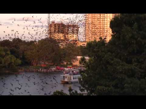 BatFest 2014 - Congress Street Bridge Austin Texas - Millions of bats