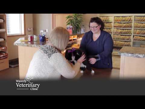 Waverly Veterinary Clinic - Health Beauty Commercial