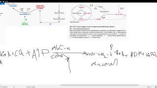 Синтез жирных кислот и его регуляция Влияние избыточного потребления углеводов на их синтез